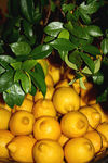Title: Lemons (Food theme)Canon EOS 1000D