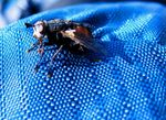 Title: A fly on my backpack