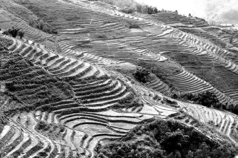 Sapa Rice Fields II