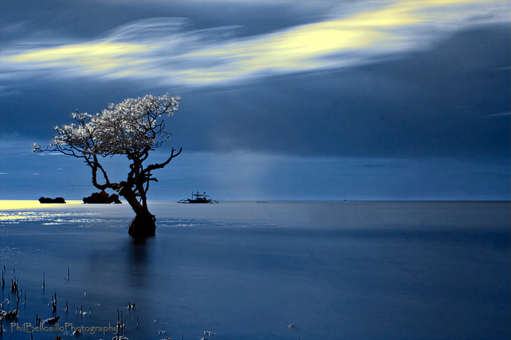 Infrared: A Lone Mangroove Tree