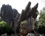 Title: Stone Forest