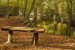 Title: Bench with Autumn Colors