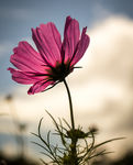 Title: Looking up to a Flower