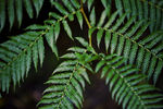 Title: Fern Close Up