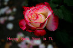 Title: New Year RoseCanon D30