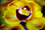 Title: Orchid Smile!EOS 5d Mark II