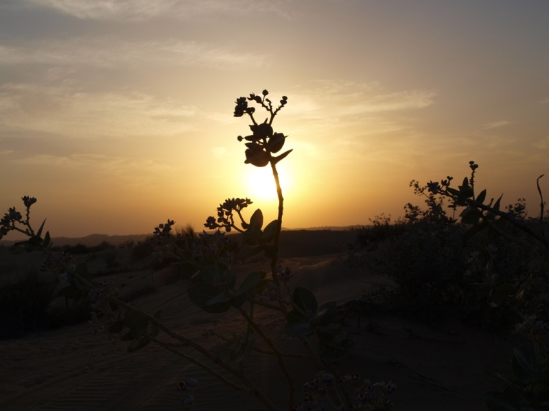 Sunset on Desert
