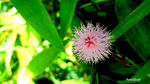 Title: pink in the green