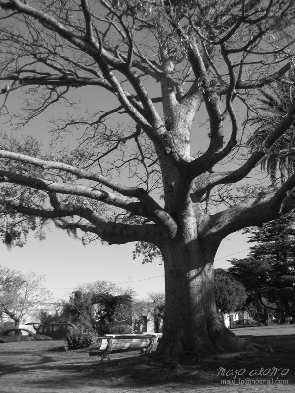 The Old Wise Tree