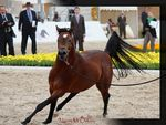 Title: International Arabian Horse ShowCanon EOS 600D