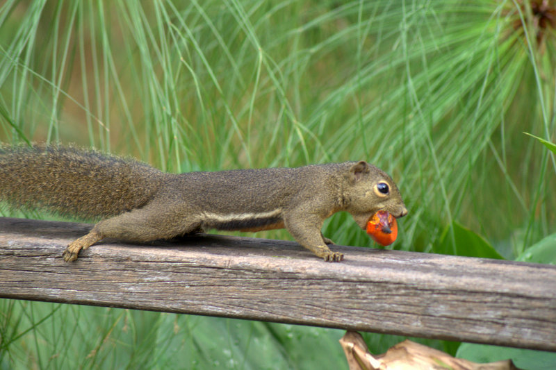 Squirrel going home