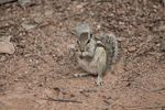 Title: Quarrel with a squirrelCanon EOS 1100D