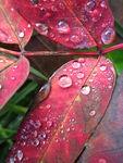 Title: Dew on the leaf