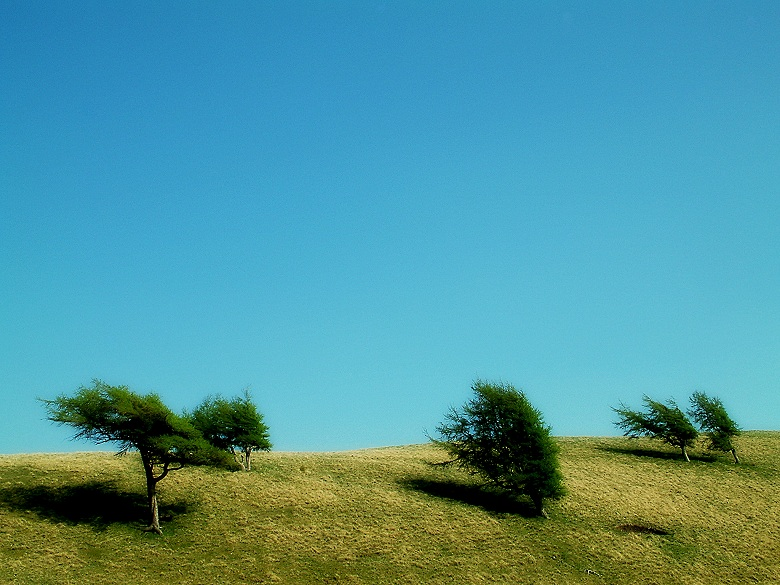 windblown trees