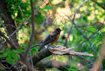 Title: Little Birdie in the Tree!Nikon D60