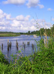 Title: Ashley River marshes
