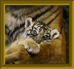 Title: In Mother�s Paw