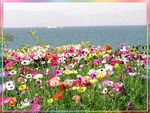 Title: flowers & sea
