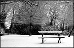 Title: The Bench