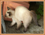 Title: ¤ Naïs, a frightened cat !!