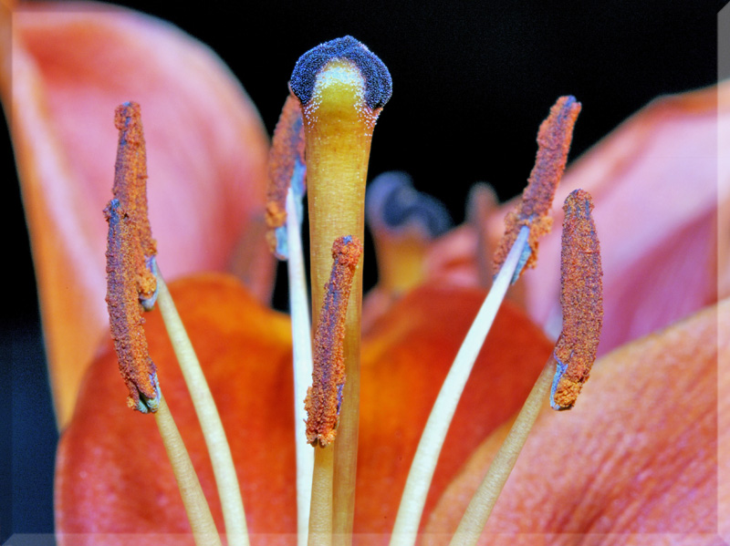 Lilly: Up close and personal