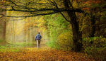 Title: Autumn in the Amsterdam Forest