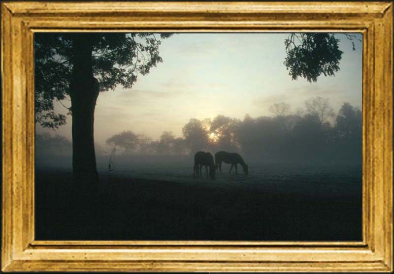 Abcoude horses in the morning