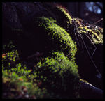Title: Moss in the SunCanon EOS 300