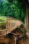 Title: Bamboo Fence at Boseong Tea Plantation