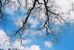 Title: Blue Sky with Branch