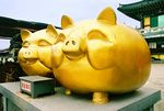 Title: Gold PigsPentax Me Super