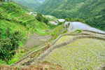 Title: Ifugao Rice TerracesNikon D 90