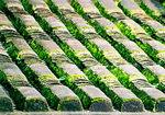 Title: Roof tiles and Moss