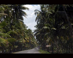 Title: The Road through the Coconut Groove
