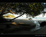 Title: Under the mangrove trees