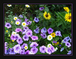 Title: The colours of summerCanon PowerShot SD600