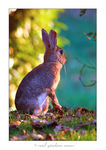 Title: rabbit [standing]Nikon D200 Digital SLR
