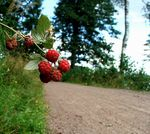 Title: Raspberry's along the roadFuji Finepix S5500