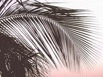 Title: palm-is-treeSiPix SC 3300
