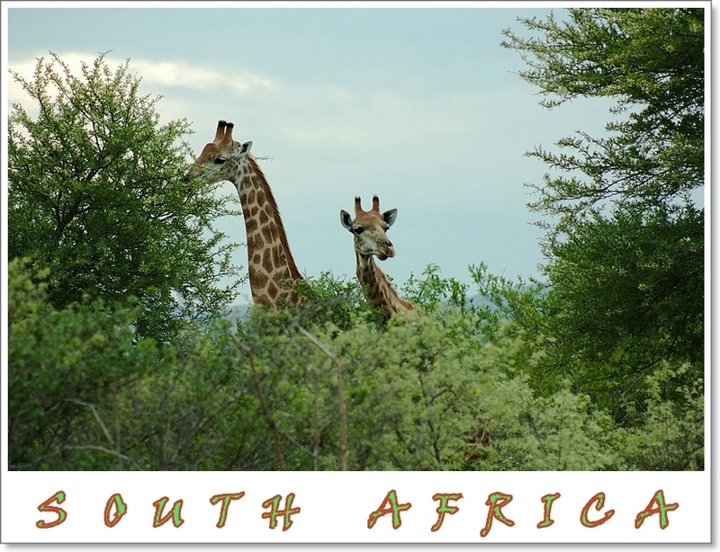 Postcard from South Africa