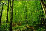 Title: Green Trees