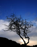 Title: Tree at Ogna