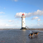 Title: Dogs and LighthouseCanon EOS 10D