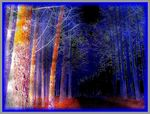 Title: Enchanted forest