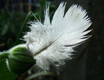 Title: Feather