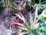 Title: An Assortment of Colorful Plants