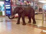 Title: ELEPHANT @ SHOPPING CENTER?