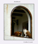Title: Cats in AndaluciaCanon EOS 30D