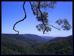 Title: Springbrook Lookout