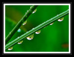 Title: Water Droplets IISony DSC-H1